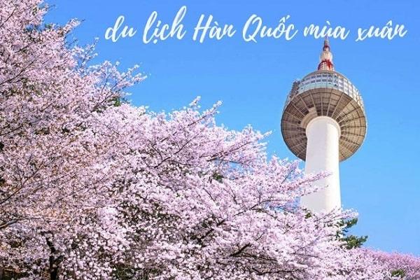 Trải nghiệm tuyệt vời du lịch Hàn Quốc vào mùa xuân 2019